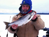 Maine Landlocked Salmon