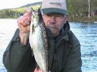 Smelt-Run Salmon
