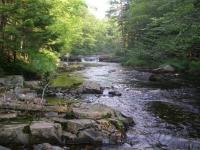 Mid-Summer Spring Brook