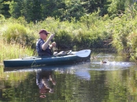 Spring Brook in Summer