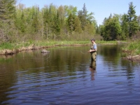 May Dry-Fly Fishing