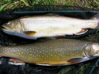 Two for Shore Lunch