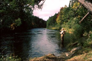 Maine Trout Stream