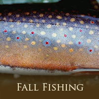 Whats Hot Fall Fishing